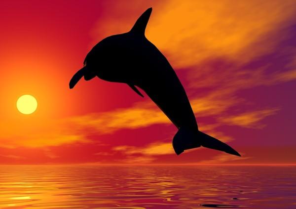 FOND d'écran dauphin GIGANTESQUE à ne pas louper