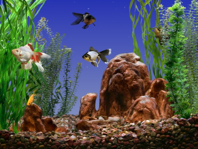 Gifs divers page 8 for Fond ecran gratuit aquarium