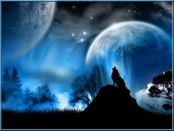 Fond d 39 ecran loup magnifique for Magnifique fond ecran