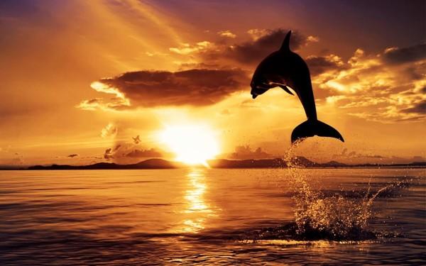 5 dauphins en fond d cran magnifique pour vous fond d for Magnifique fond ecran