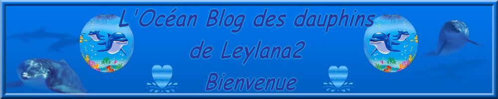 Dauphins d'Amour de Leylana2