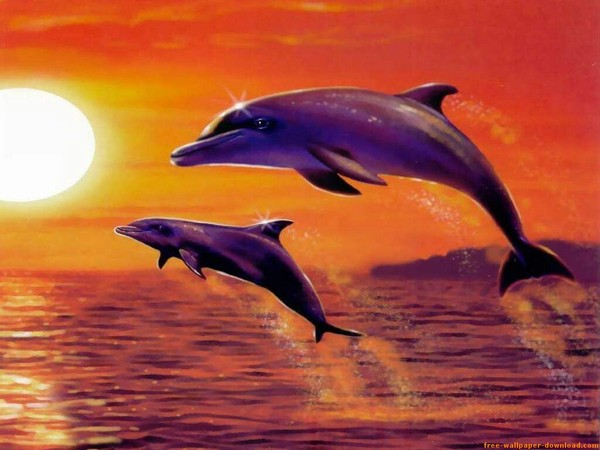 2 dauphins en fond d cran magnifique pour vous. Black Bedroom Furniture Sets. Home Design Ideas