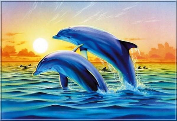 2 dauphins en fond d 39 cran servez vous magnifique. Black Bedroom Furniture Sets. Home Design Ideas