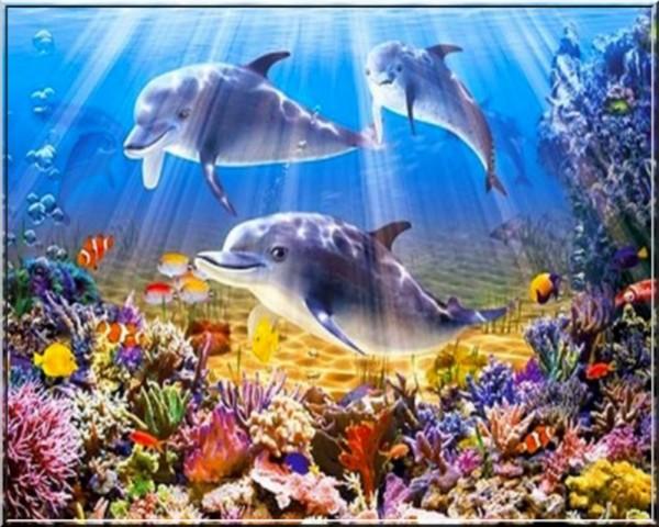 Fond d 39 ecran dauphin for Fond ecran qui bouge pour pc