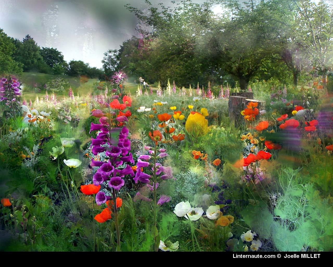fond écran champs de fleurs