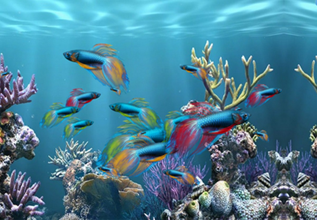 Desktop background fond d 39 cran gratuit aquarium qui bouge for Nouveau fond ecran gratuit