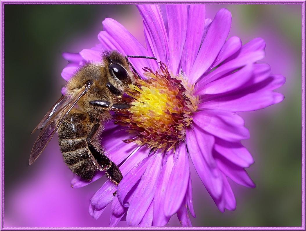 pourquoi les abeilles disparaissent stop neonics. Black Bedroom Furniture Sets. Home Design Ideas