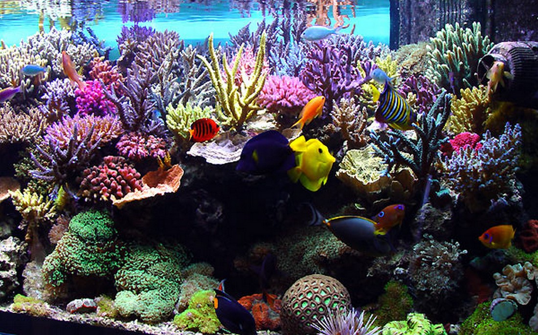 desktop background fond d 39 cran anim gratuit aquarium